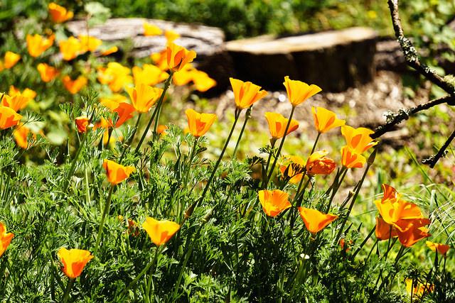 Blumen im Botanischen Garten (Sommerfest-Ideen)